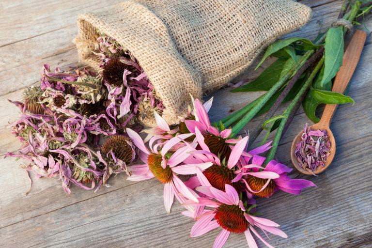 dried echinacea flowers